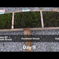 Awaken ST + Dyna-Shield Foothold Virock Seed Treatment Timelapse